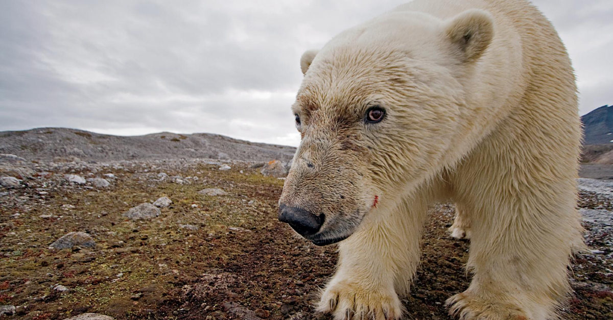 orsi cambiamenti climatici
