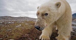 Riscaldamento globale: gli animali sono in pericolo, e anche noi
