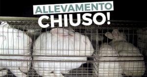 Vittoria! Dopo nostra indagine chiude allevamento di conigli