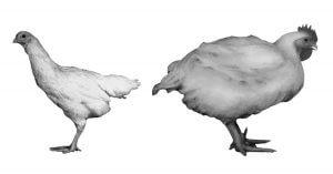 L'effetto degli allevamenti sul corpo degli animali