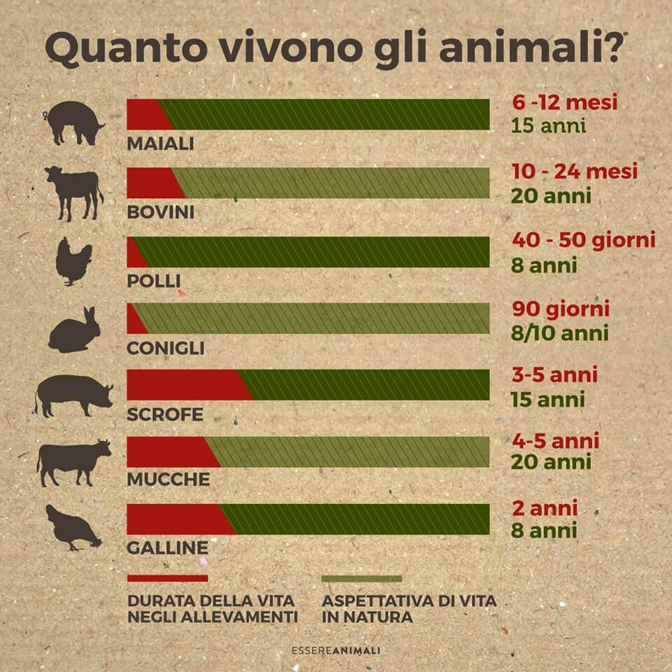 età uccisione animali per la carne