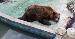 13 foto ti mostrano che gli zoo sono una presa in giro