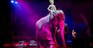 Progresso! Anche l'Italia eliminerà il circo con animali