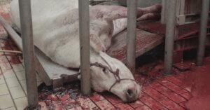 L'Italia tornerà a esportare carne bovina in Cina: pessima notizia!
