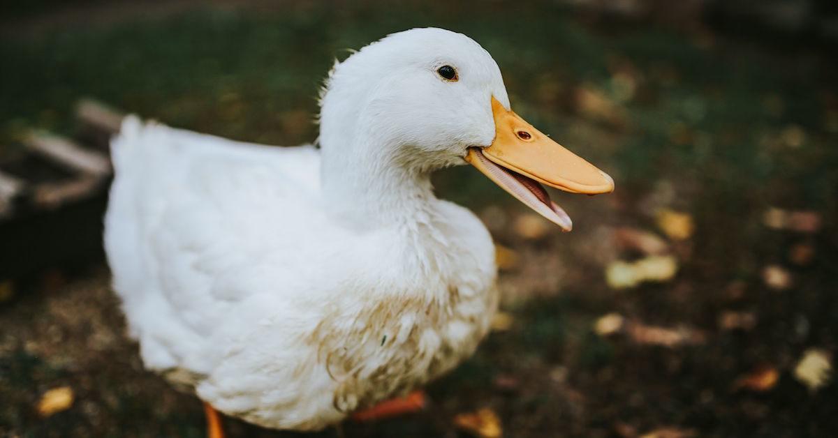 lidl dice no al foie gras e aderisce a campagna #viadagliscaffali