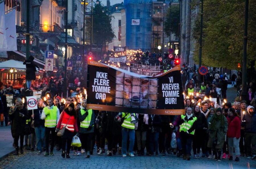 oslo norvegia protesta contro allevamenti volpi e visoni