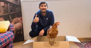 Lella una gallina coraggiosa salvata da un allevamento intensivo