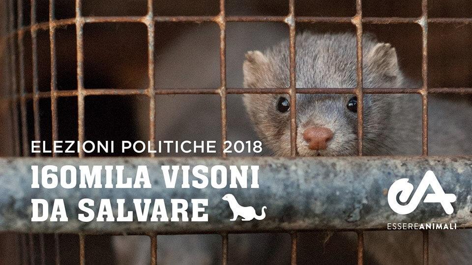 la campagna per chiudere allevamenti di animali da pelliccia in Italia