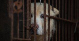 Indignazione per la carne di cane in Corea: paradossi delle Olimpiadi