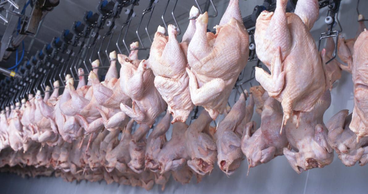 macello di polli industriale