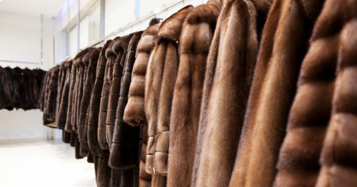 san francisco vieta vendita di pellicce