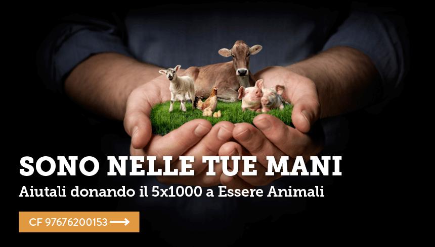 Dona il tuo 5x1000 a Essere Animali