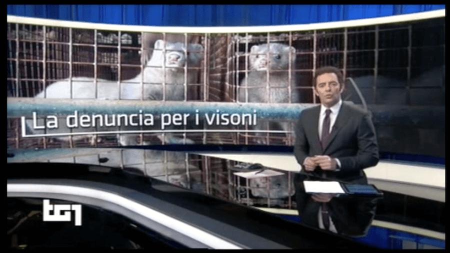 tg 1 rai 1 servizio su allevamenti da pelliccia su indagine Essere Animali