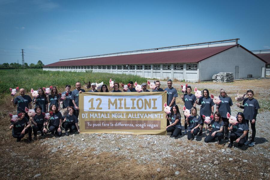 protesta dimostrativa di essere animali davanti ad allevamento intensivo di maiali