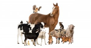 In Vallonia un codice molto avanzato in difesa degli animali