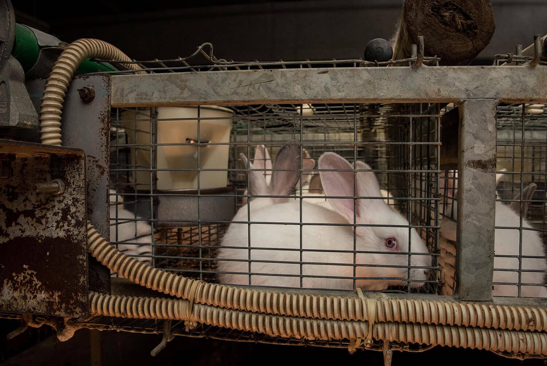 Imprigionati in gabbie
