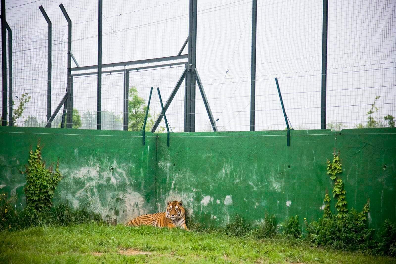 Zoo = prigione
