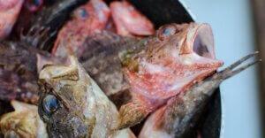 Nel pesce mercurio e plastica oltre i limiti