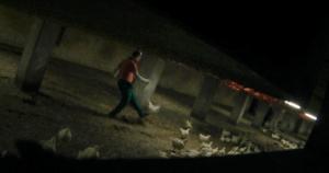 13 foto che evidenziano il maltrattamento dei polli negli allevamenti intensivi