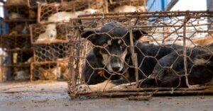 A Yulin cani e gatti macellati, ma che dire delle nostre barbarie?