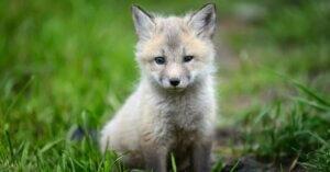 In Lussemburgo no animali da pelliccia e stop pulcini tritati vivi!