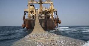 Il 9 luglio è il fish dependence day dell'UE. Il pesce è finito