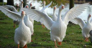 Anche Realco Sigma dice STOP al foie gras