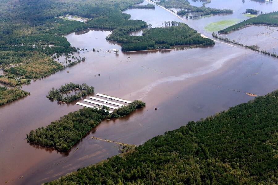 Allevamento inondato