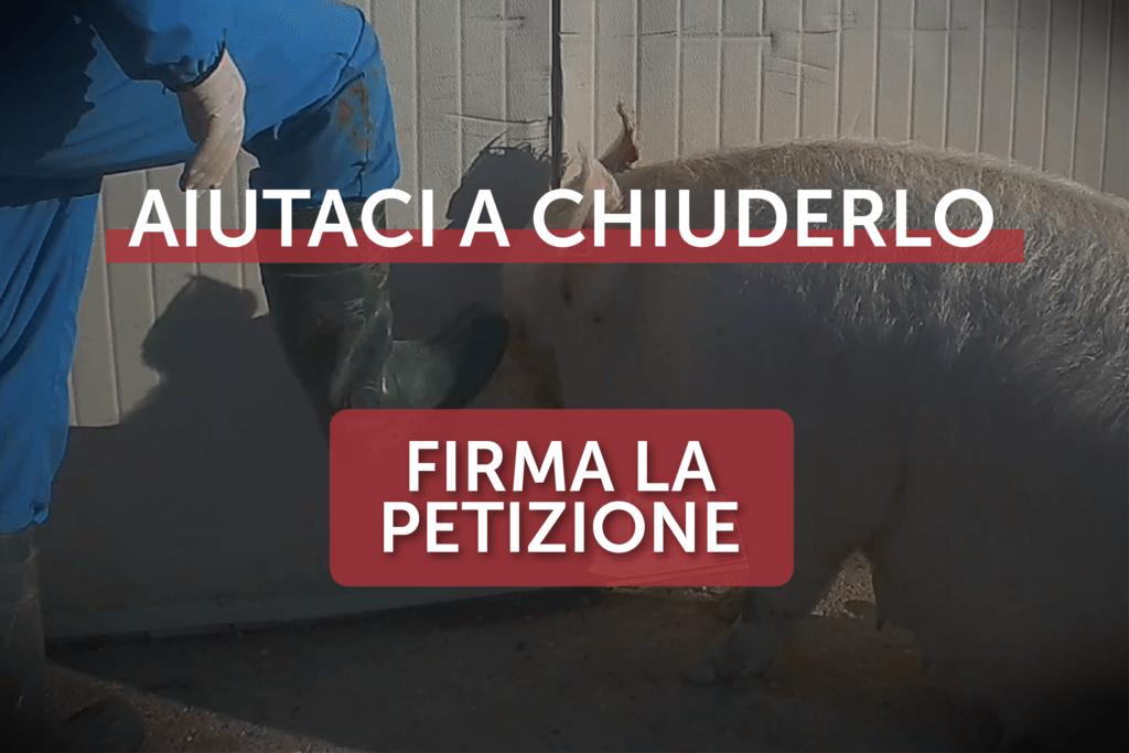 petizione per chiudere allevamento maiali maltrattamenti prosciutto di parma