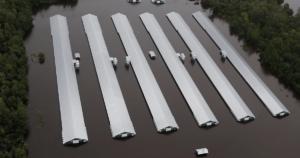 Abbandonati negli allevamenti, milioni di animali annegati durante l'uragano Florence