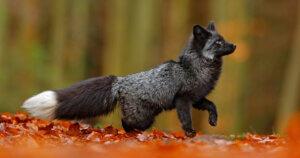 Anche per Jean Paul Gaultier la svolta Fur-Free!