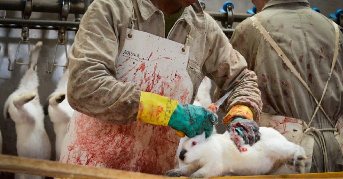 Macellazione di un coniglio