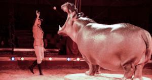 Stop ai circhi con animali: impegno del Governo dopo il nostro video