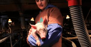 Perché è importante la Giornata Mondiale per i Diritti degli Animali