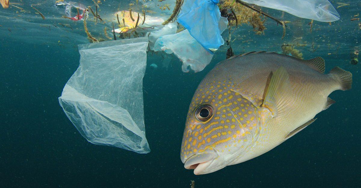 pesce in mezzo ai rifiuti