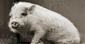 Animali della terza età: ecco come sarebbero se li lasciassimo vivere