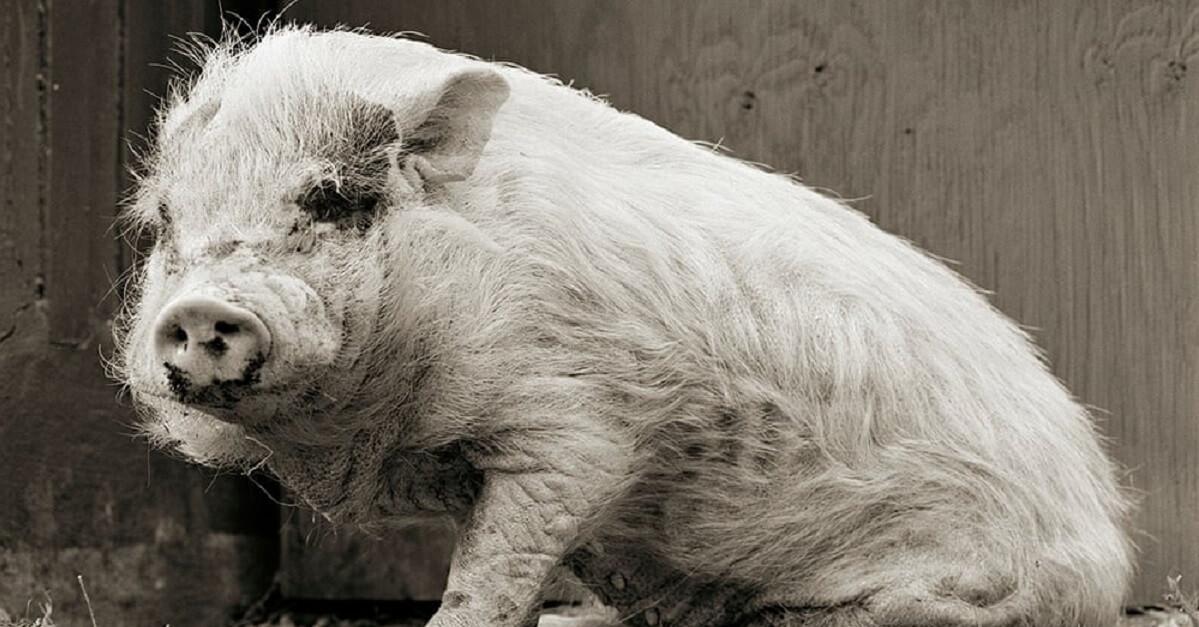 Fotografie di animali anziani