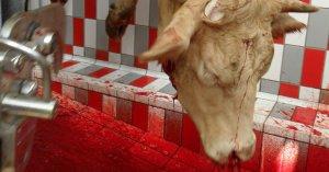 4 modi orribili in cui sono uccisi gli animali degli allevamenti intensivi