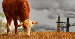 Gli allevamenti intensivi inquinano più delle auto
