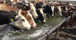 Quanto acqua si spreca e si inquina per produrre carne, latte e uova?