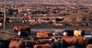 Allevamenti intensivi: ecco le 5 conseguenze più terribili per noi e per il pianeta