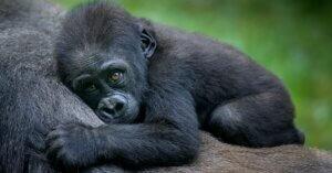 Biodiversità: l'impatto dei cibi di origine animale su fauna e flora selvatica