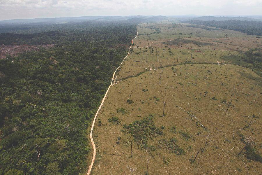 deforestazione per produrre carne