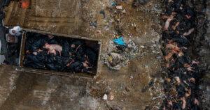 Negli allevamenti intensivi le epidemie sono incontrollabili