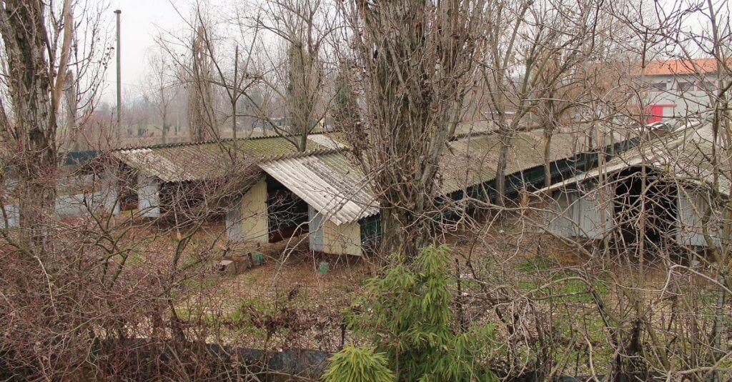 Vittoria: chiuso l'allevamento dove abbiamo filmato l'uccisione dei visoni