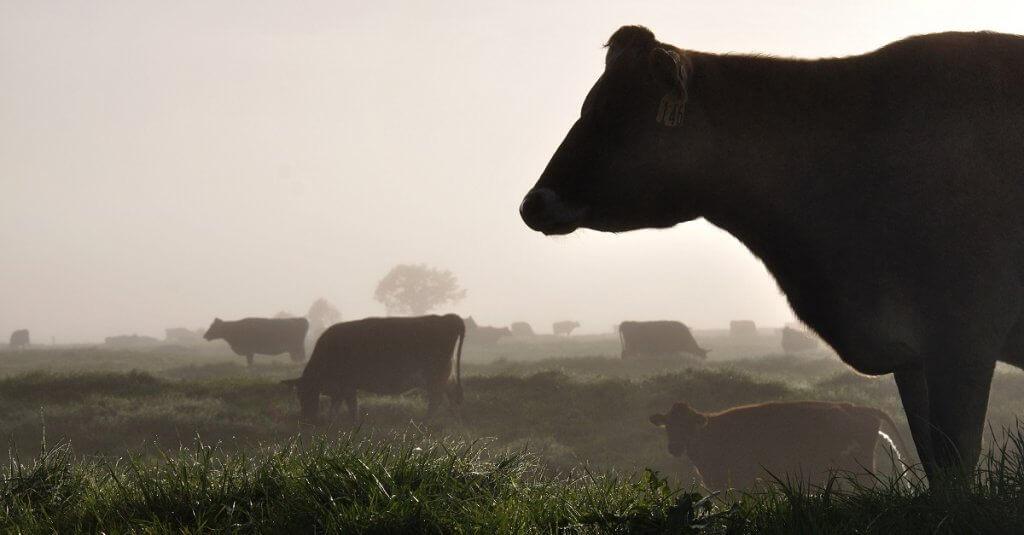 Nuovo rapporto ONU: mangiare meno carne vuol dire salvare il pianeta