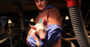 4 anni di impegno in difesa dei maiali