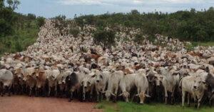 I sussidi all'industria della carne stanno distruggendo il pianeta