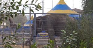 A Brescia animali del circo parcheggiati in mezzo al cemento