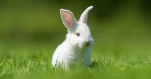 Conigli: ha chiuso il 60% degli allevamenti in una delle zone più produttive